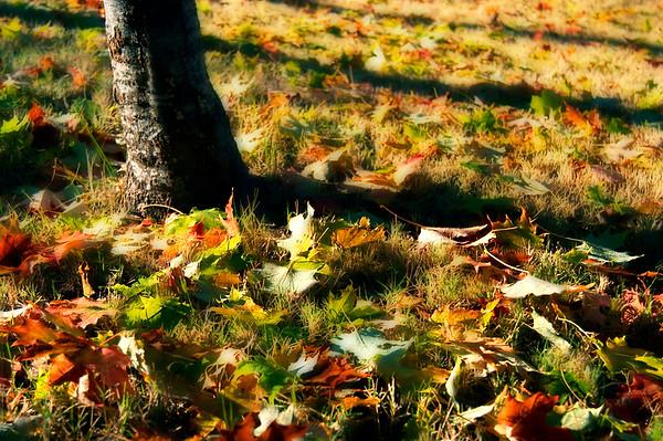 November Light*