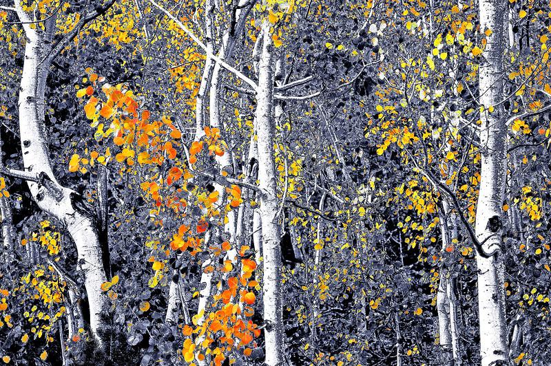 Aspen Orange     California