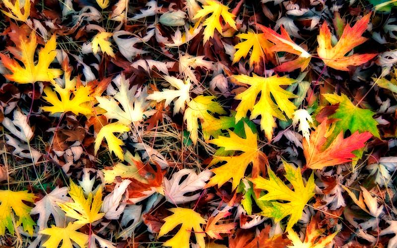 Fallen Color*