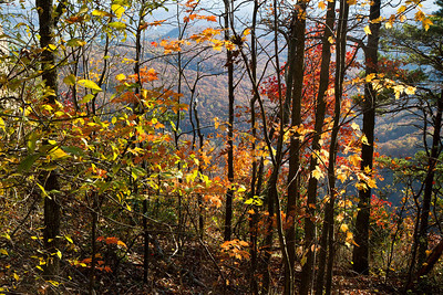 Autumn trees in Cumberland Gap National Historic Park