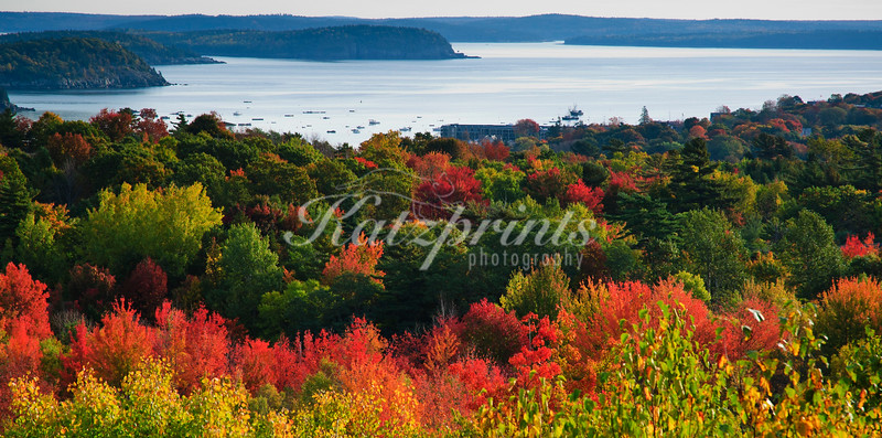Colorful trees glow in early morning light near Bar Harbor, Maine
