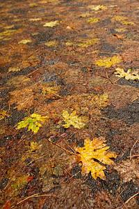Leaf mush