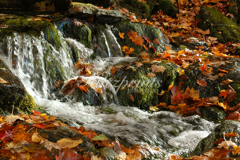 Fallen leaves along a creek close to Stowe, Vermont