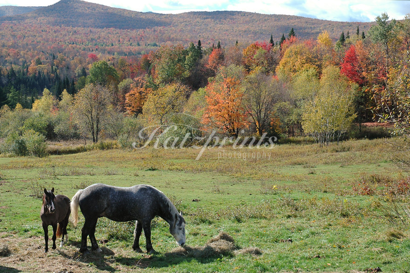 Horses in front of autumn backdrop