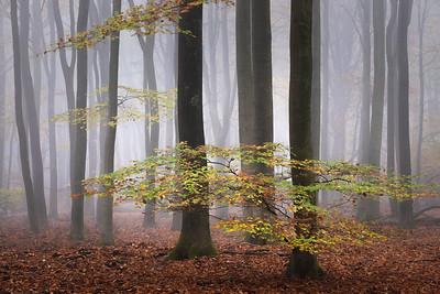 Dashing leaves