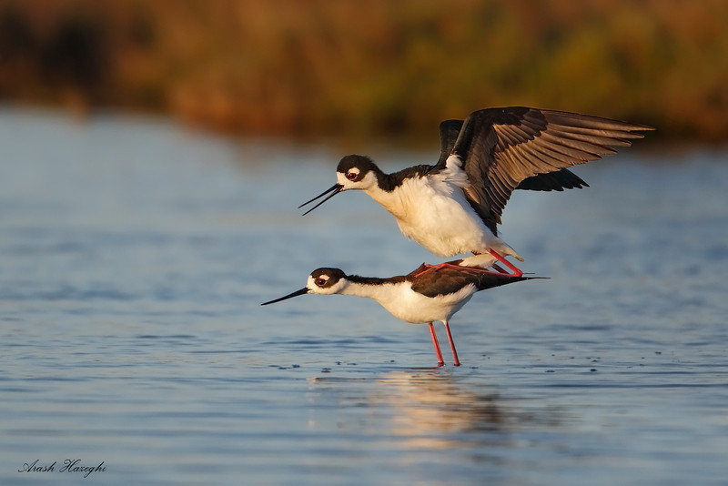 Mating stilts