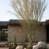 Modern sparse boulders & cacti & Agaves