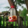 HUMMING BIRDS. ALTO PARANA. PARANA.