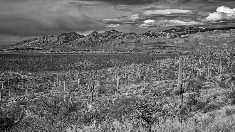Catalina Mountains with Mt Lemmon in the background #1