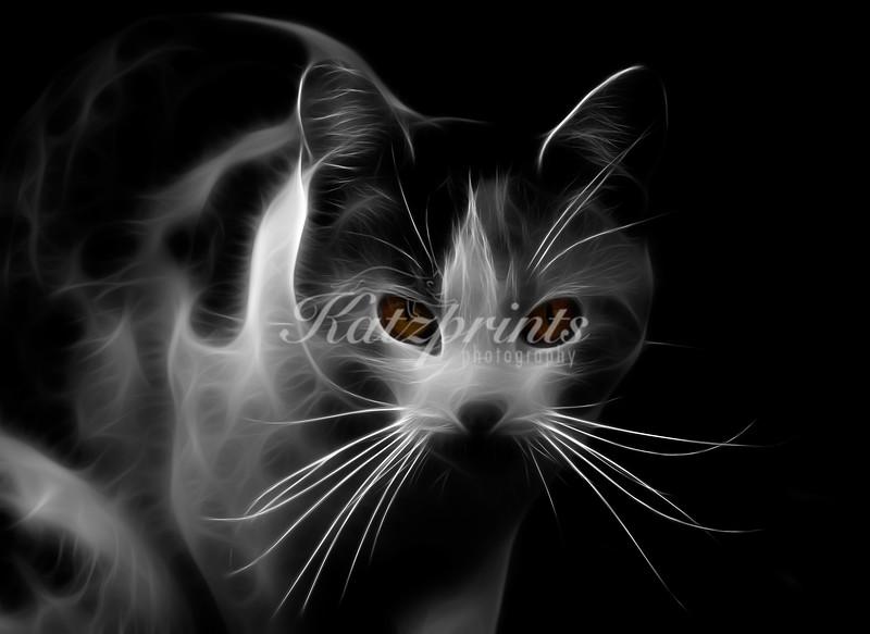 Cat portrait, black-and-white