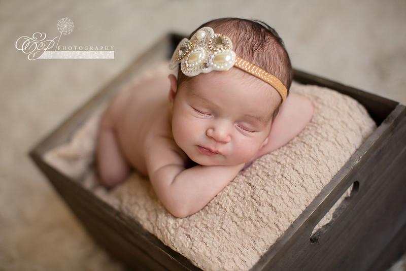 Newborn Photographer Jacksonville, Florida