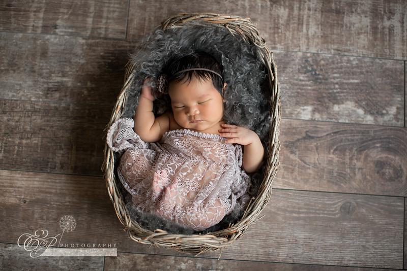 newborn photographer Jacksonville Florida