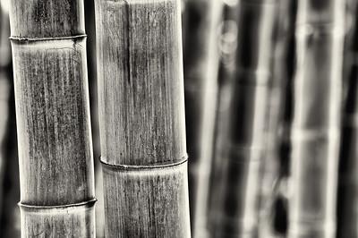 Moganshan - bambuszerdő