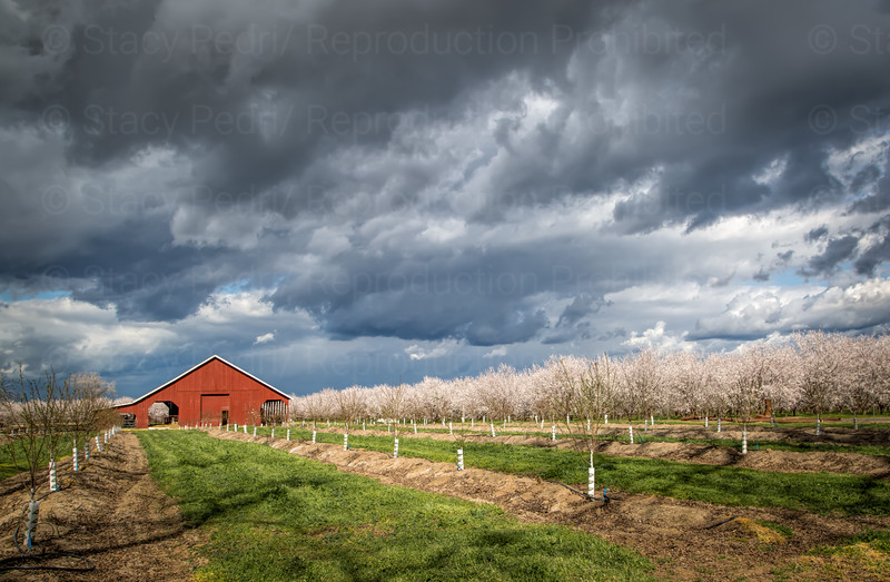 Storm in the Orchard