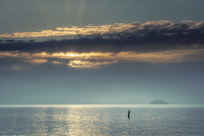 Light and Seagull