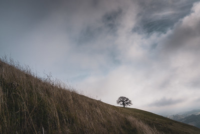Lone Tree & Low Clouds