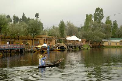 Lady rowing a boat in the Dal Lake, Srinagar, Kashmir, J&K, India.