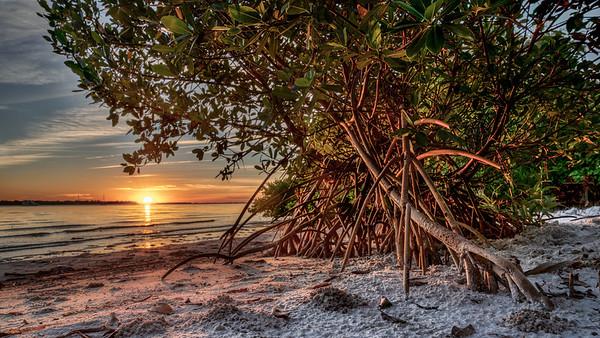 Mangrove Glow