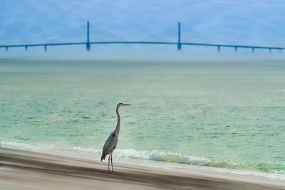 Heron and the Bridge