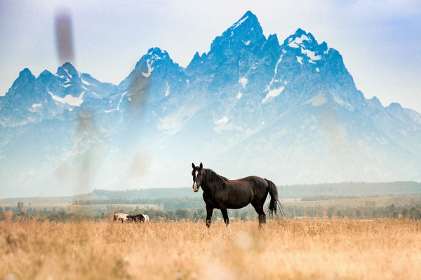 Horse Jackson Hole Wyoming Grant Teton National Park
