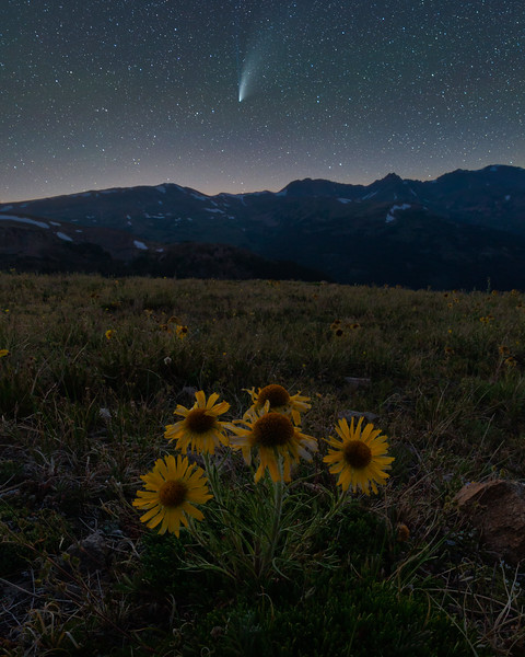 Comet Neowise and Alpine Sunflowers Rocky Mountains Colorado
