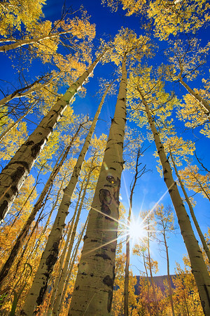 Autumn Foliage and Sun Aspen Colorado