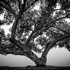 Believe Tree - White
