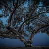 Believe Tree - Blue