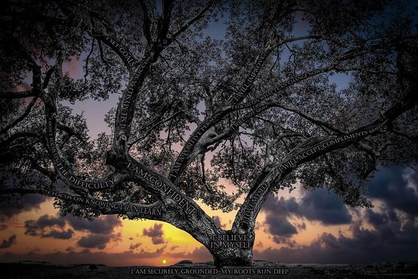 Believe Tree - Black's BeachSunset