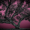 Believe Tree - Pink