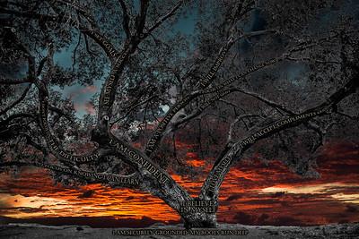 Believe Tree - La Jolla Sunset