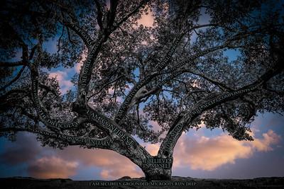 Believe Tree - Clouds Sunset