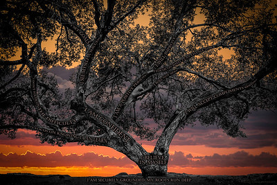 Believe Tree - Kwaay Paay Sunset