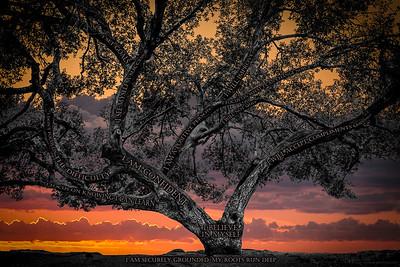 Believe Tree - Mountain Sunset