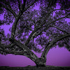 Believe Tree - Purple
