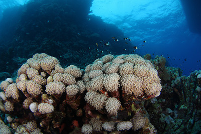 Just under the boat - St John's Reef, Egypt Nov 2010