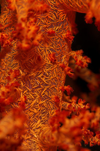 Soft coral - St John's reef, Egypt, Feb 2010