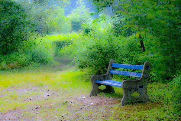 The Woods, Leighton, PA (c) Daniel Yoffee