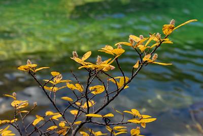 Autumn Willow