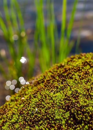 Golden Green Moss
