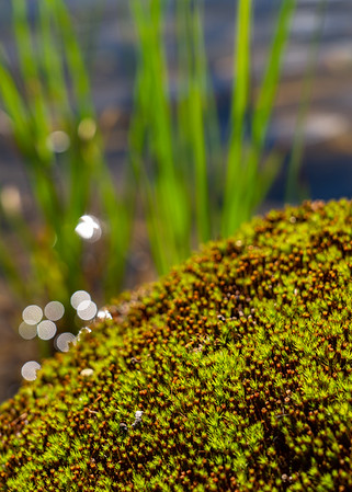 Moss Sparkle