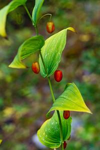 Wildberry Season