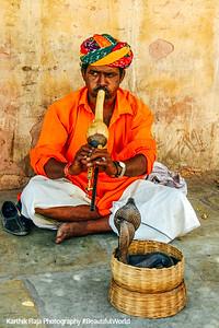Snake Charmer, Amer Fort