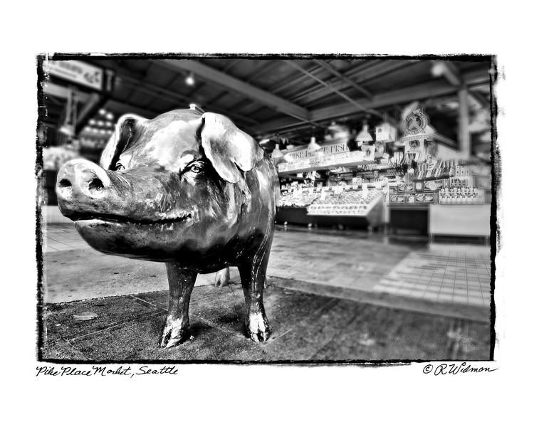 #280 Rachel The Pig