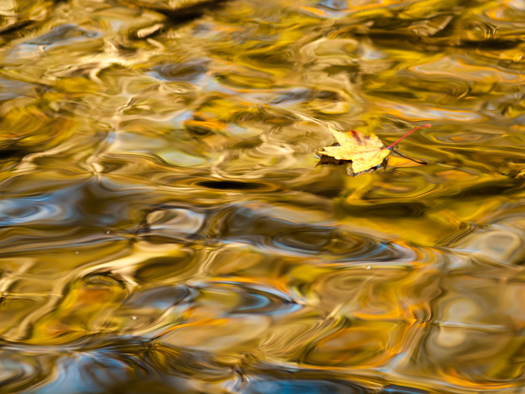 Foliage reflected in a pool just above the (practically empty) reservoir at Garwin Falls. Irresistible. OM 90mm at f2.8