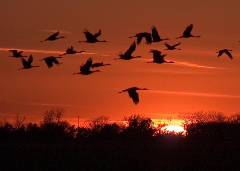 Sandhill Crane Sunset in Nebraska