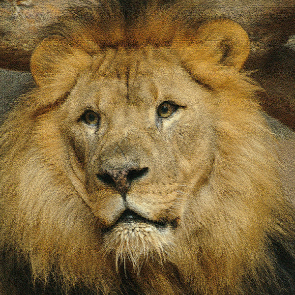 King of the Beasts - Henry Doorly Zoo