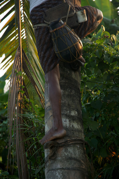 Toddy is a type of palm wine