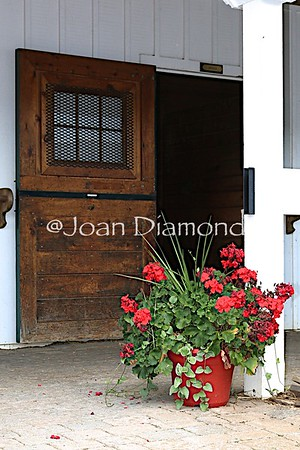 Stable Door with geraniums