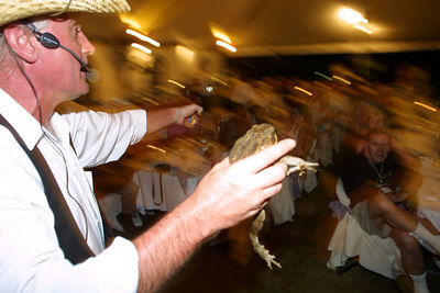 Cane Toad auction in Cairns Australia